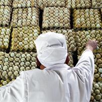 Scramble for Zhong's eggs