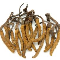 The world's costliest herb?