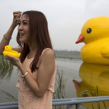 duck w