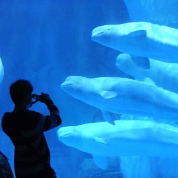 Dolphins w