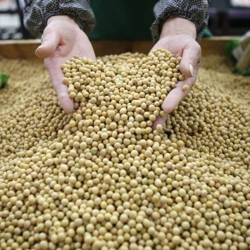 CHINA-SOYBEANS/MARUBENI/