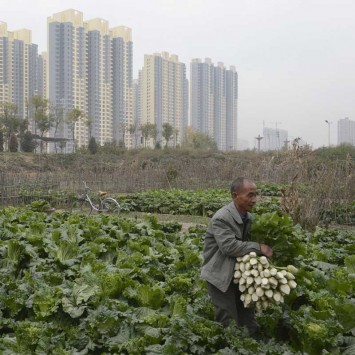 Man collects radishes outside his home near construction site of a residential complex on the outskirt of Taiyuan