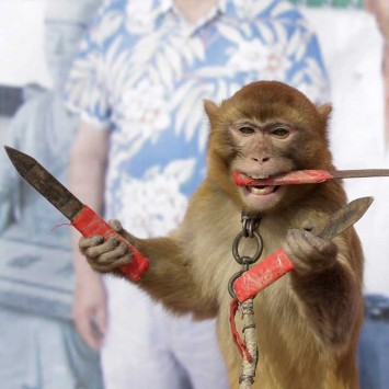 If you bet against this monkey, bring a knife to the fight...