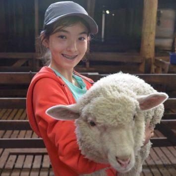 Sheep-w