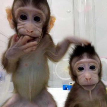 Clones-w