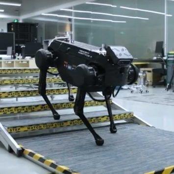 Robot-Dog-w