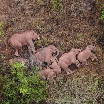 Elephants-w