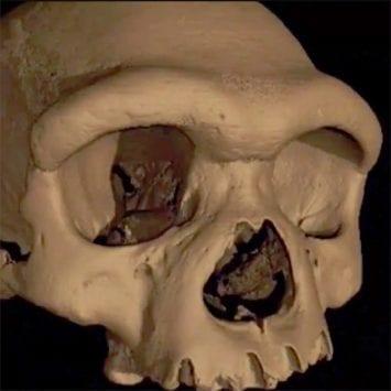 Skull-w
