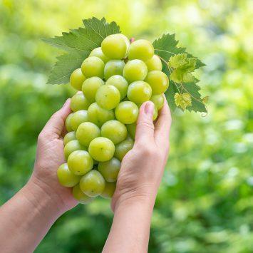 Shine-Muscat-grape-w
